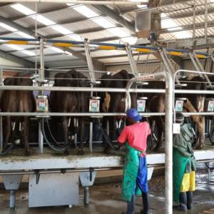 rigtech-rotary-dairy-shed