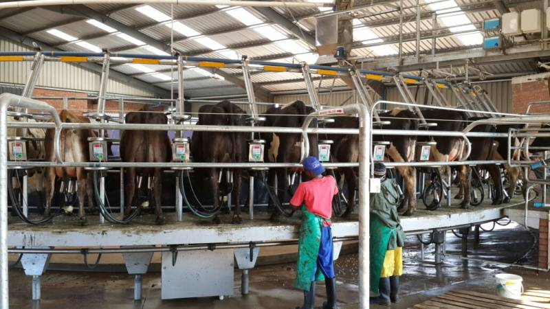 Rotary dairy shed swing over milking parlour