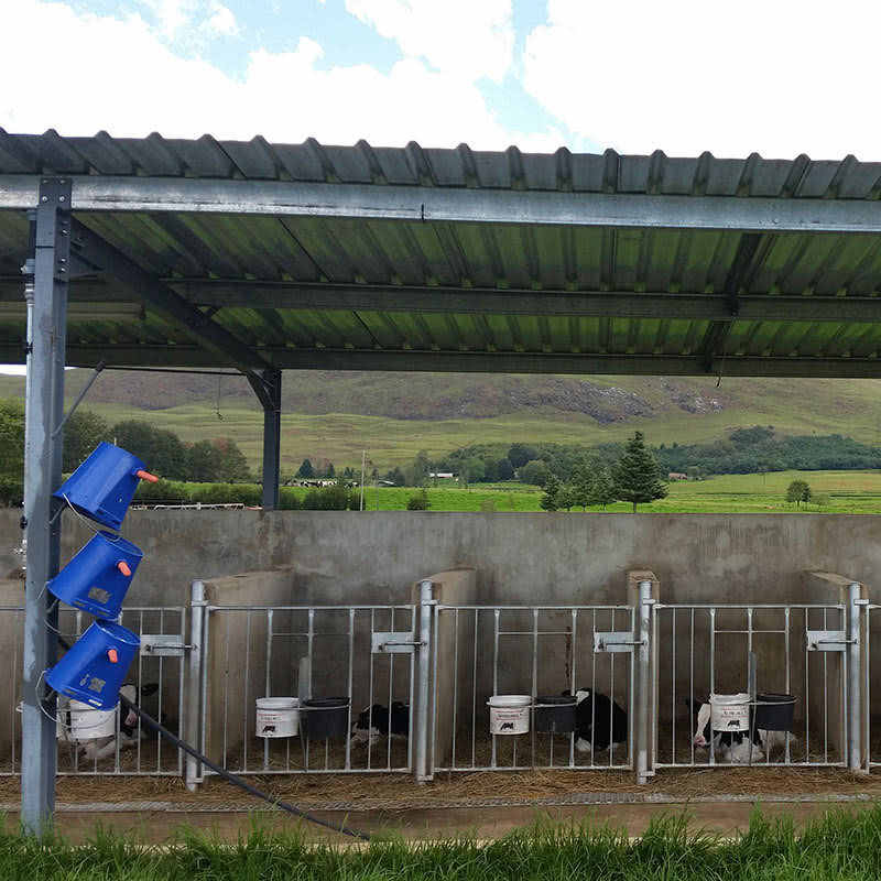 Calf Raising Pens Calf Rearing Shed Facilities